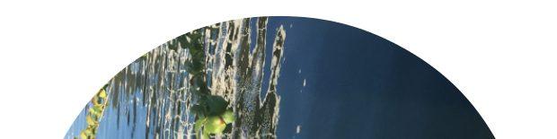 Riparian Acoustics ~ Riparian Media